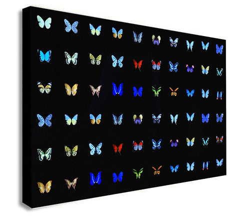 Butterfly Collage Multicolour - Canvas Wall Art Framed Print - Various Sizes