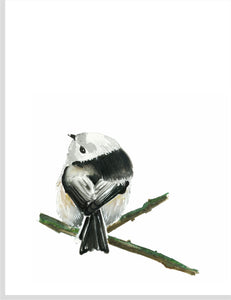 Black and White Finch