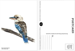 Blue Winged Kookaburra Postcard