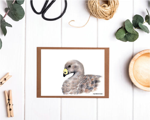 Cape Barren Goose Card