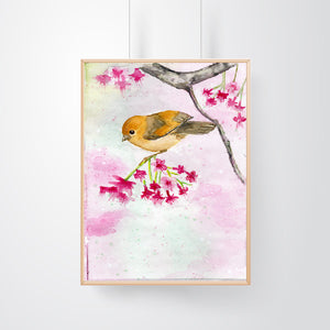 Colorful Finch on Cherry Blossom