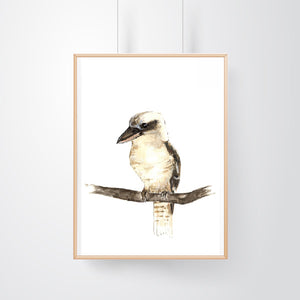 Laughing Kookaburra 2