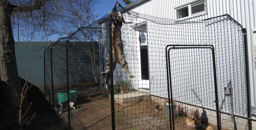new outdoor cat enclosure from the ground up