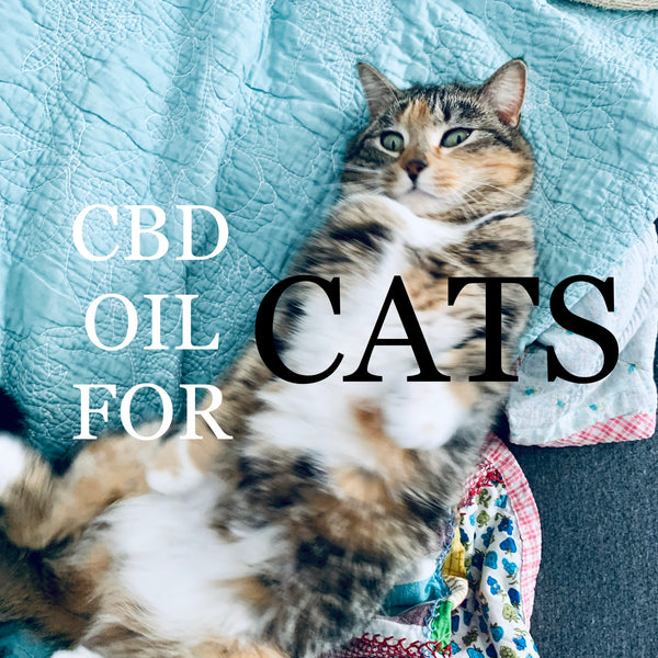 CBD Oil For Cats: Enrich Your Cats Lifestyle With CBD