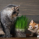 Compostable Cat Grass Grow Bag Kit, 3 Pack, All Organic, Just add Water. Made in The USA