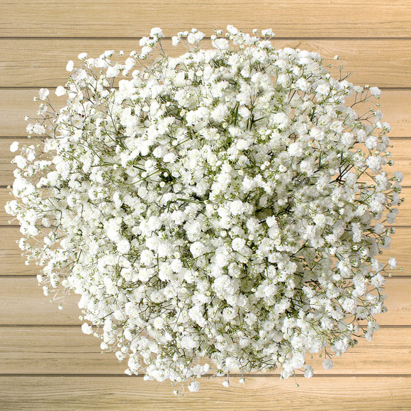 100-Stem Baby's Breath