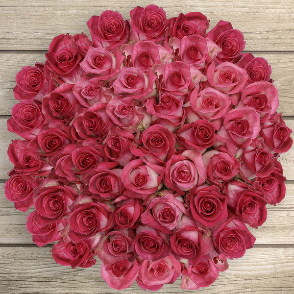 50-stem Bi-color Pink Roses