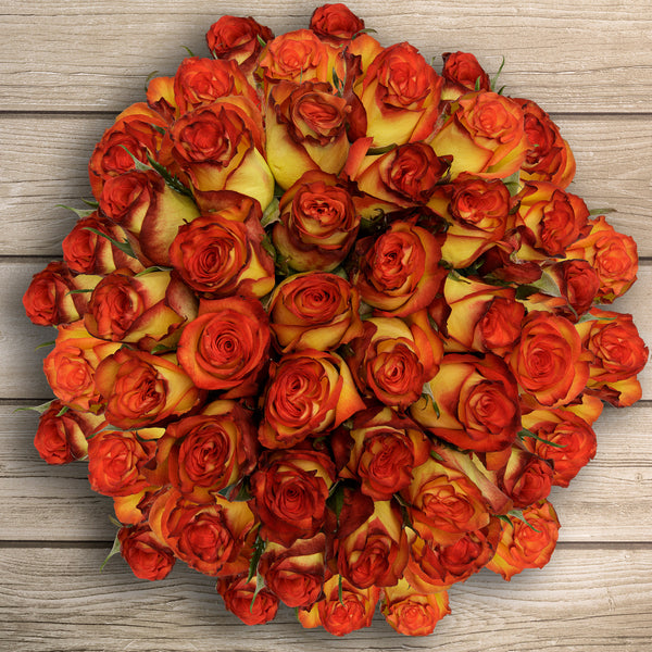 50-stem Bi-color Orange Roses