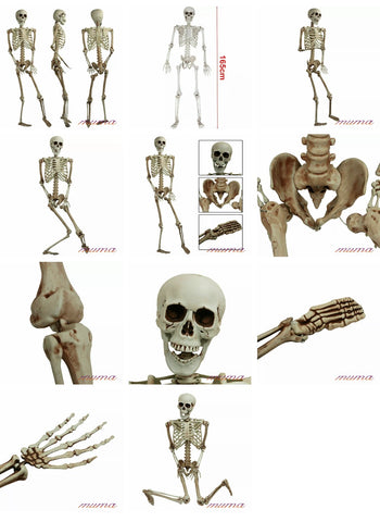 Giant Life Size Skeleton 160cm Posable Full Decoration Party  Halloween