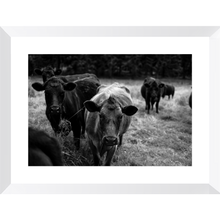 Load image into Gallery viewer, East Coast Calfs