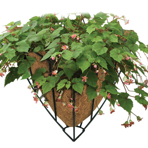 Iron Art Coconut Palm Hanging Basket-Smart Garden Shop