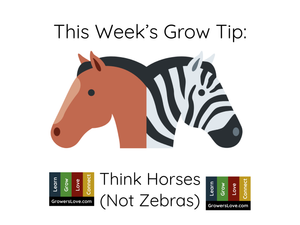 Think Horses, Not Zebras