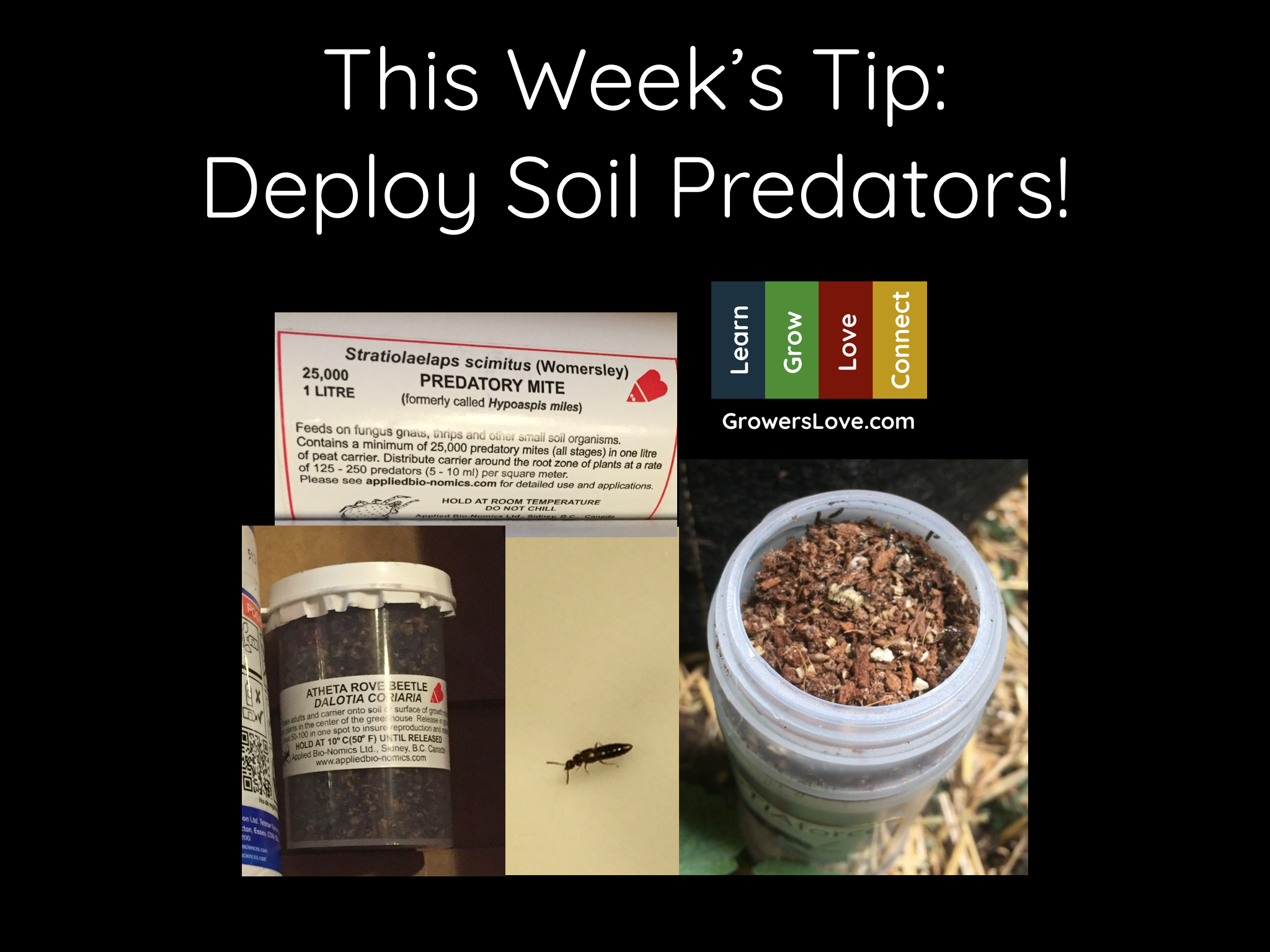 Deploy Soil Predators