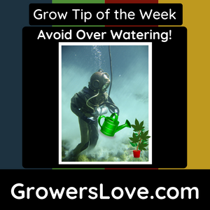 Avoid Over-Watering!