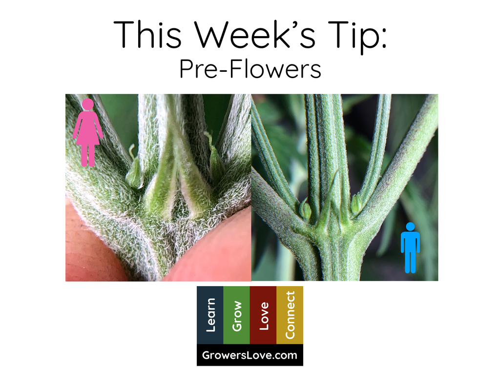 This Week's Tip: Pre-Flowers