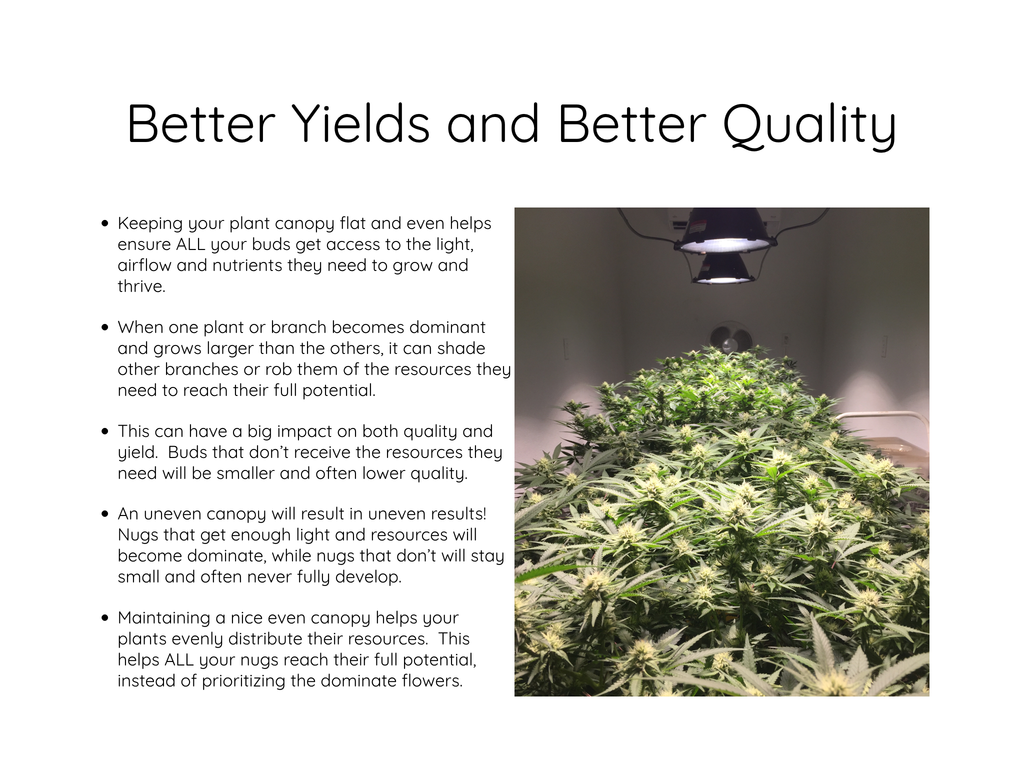 Better Yields, Better Quality