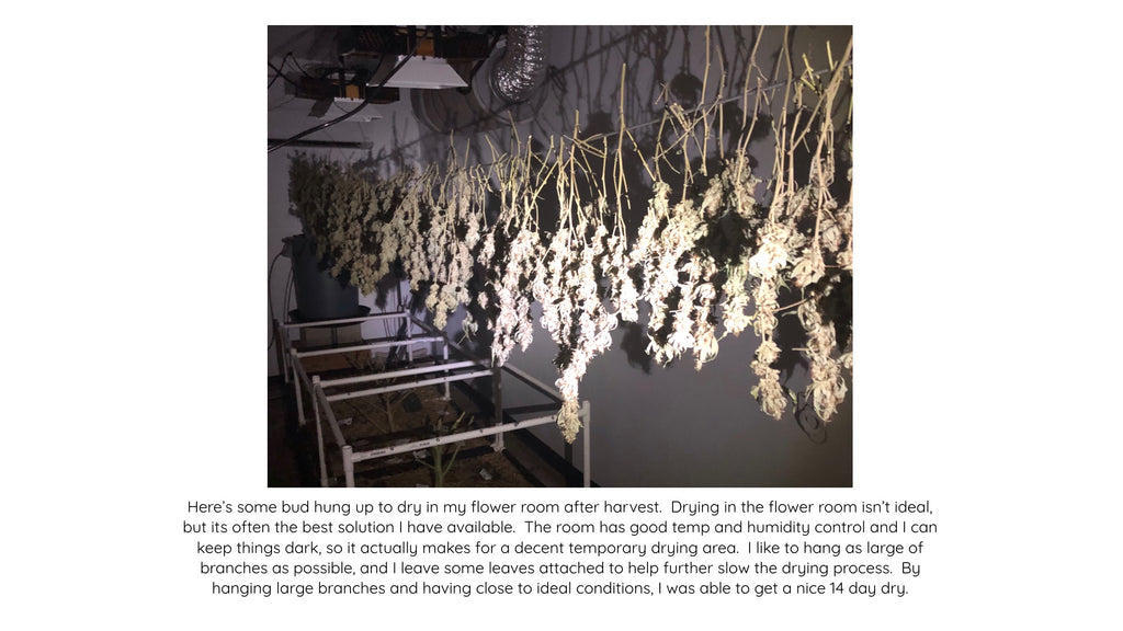 Drying Buds in the Flower Room