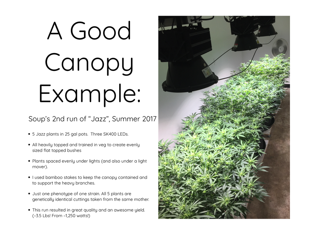 A Good Canopy Example