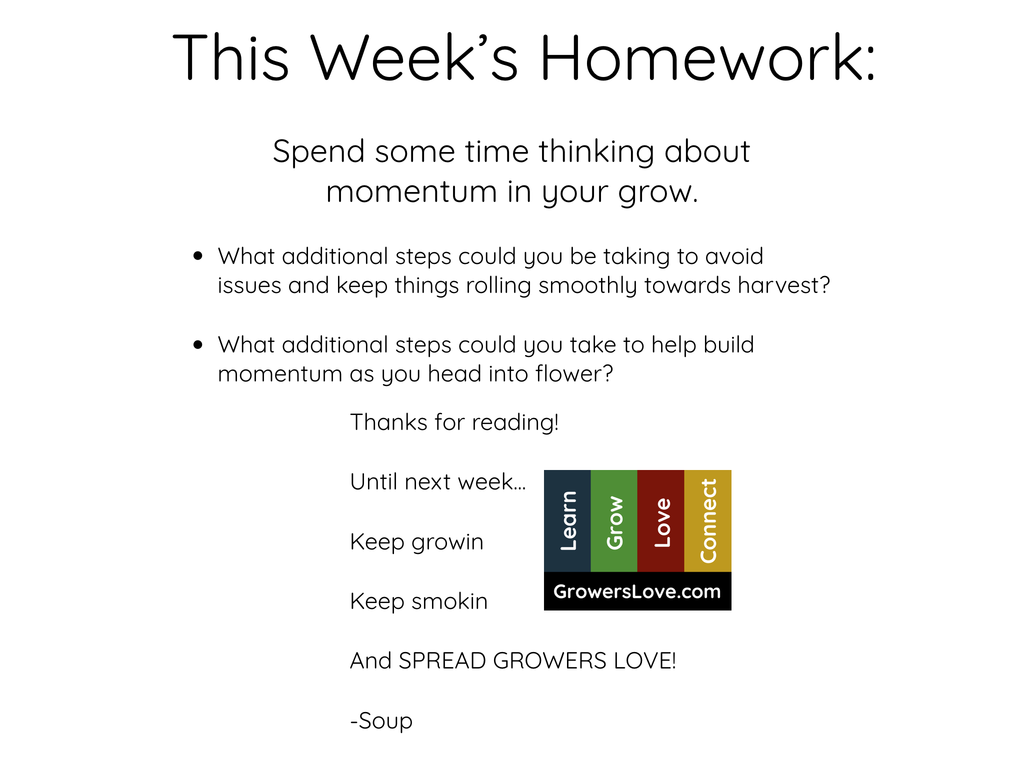 This Week's Homework