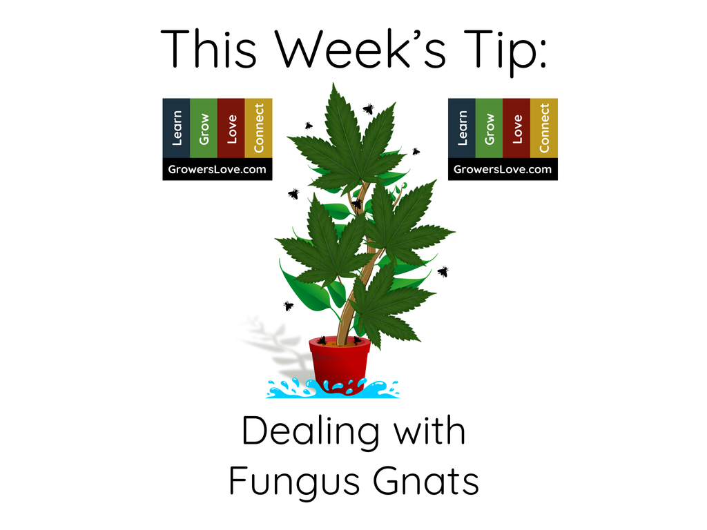 This Week's Tip, Dealing with Fungus Gnats