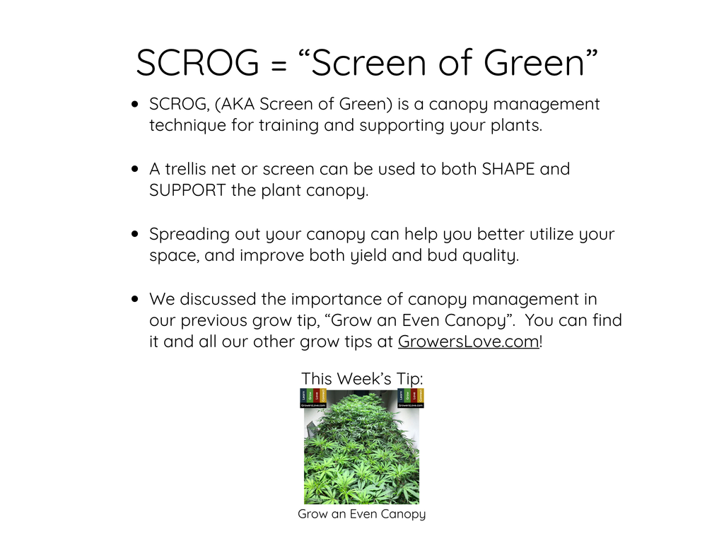 SCROG = SCReen Of Green