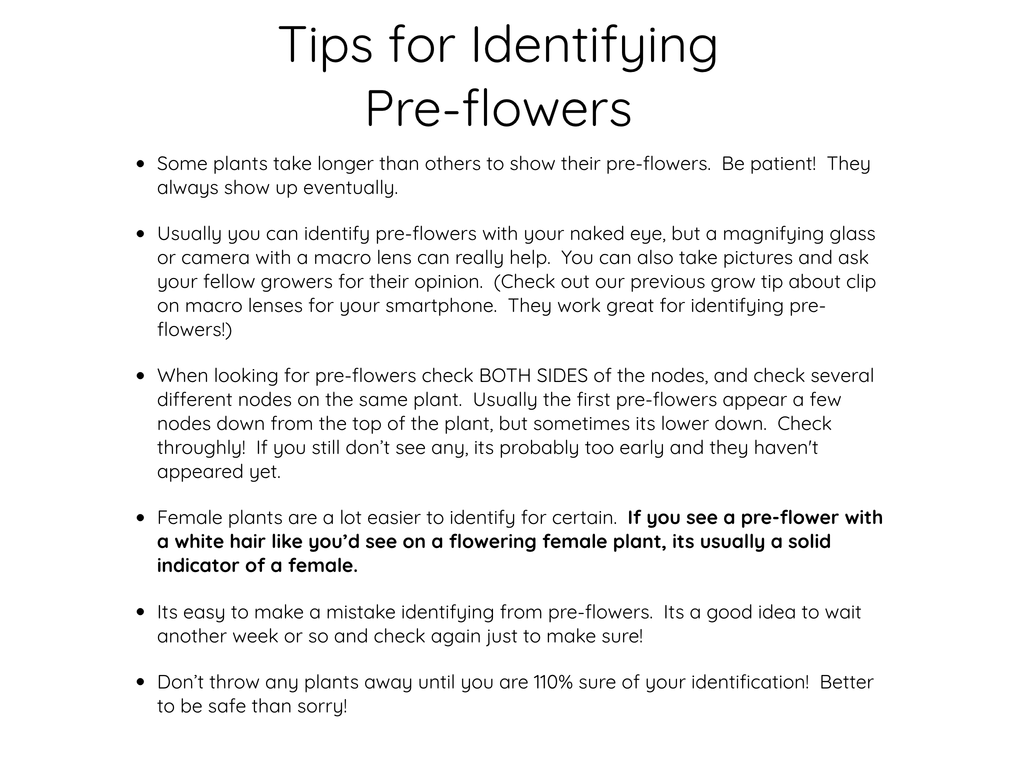 Tips for Identifying Cannabis Pre-flowers