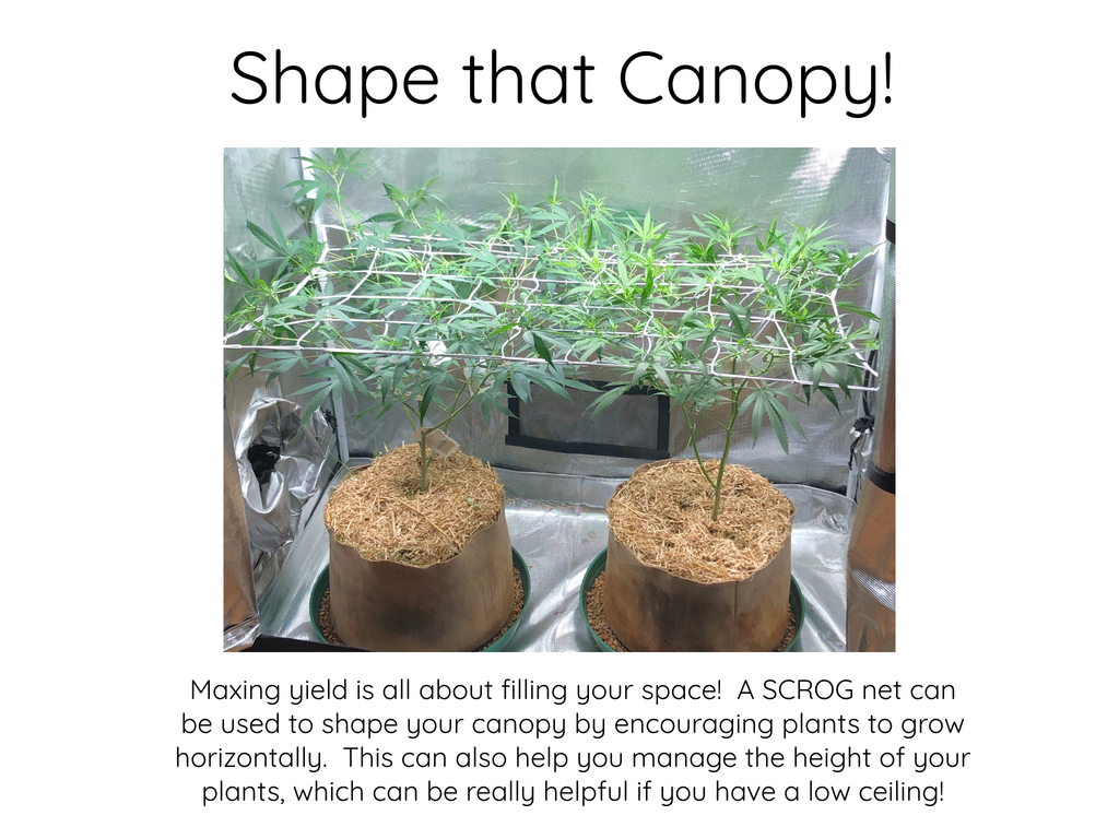 Shape that Canopy
