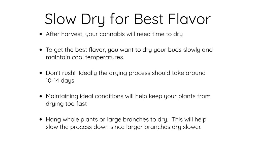 Slow Dry Cannabis for Best Flavor
