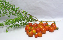 Fresh Tomatoes Cherry U-Pick per POUND