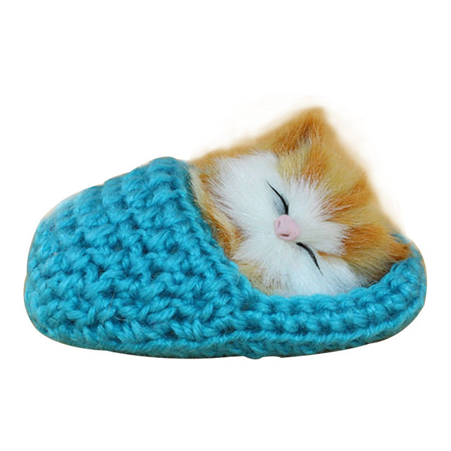 Cute Slipper Kitten