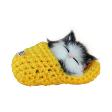 Load image into Gallery viewer, Cute Slipper Kitten