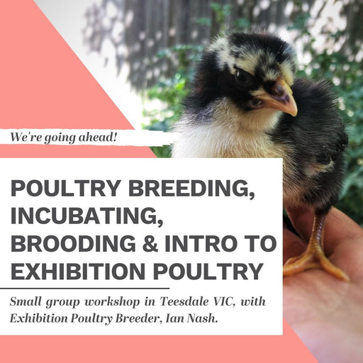 Sunday 13 December 2020: TEESDALE Exhibition Poultry Workshop + Open Garden