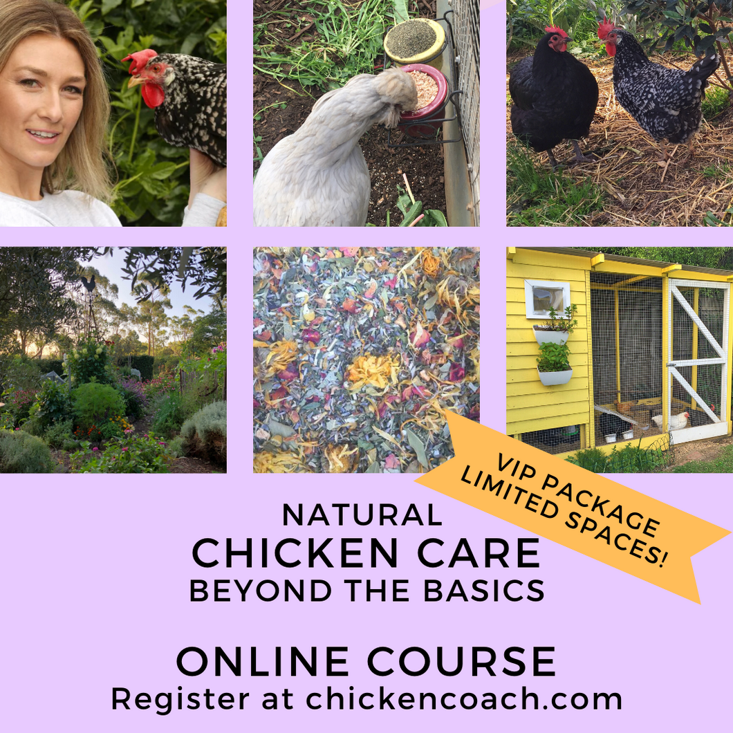 VIP OFFER Natural Chicken Care Beyond The Basics Online Course