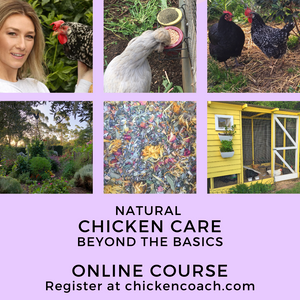 Natural Chicken Care Beyond The Basics Online Course