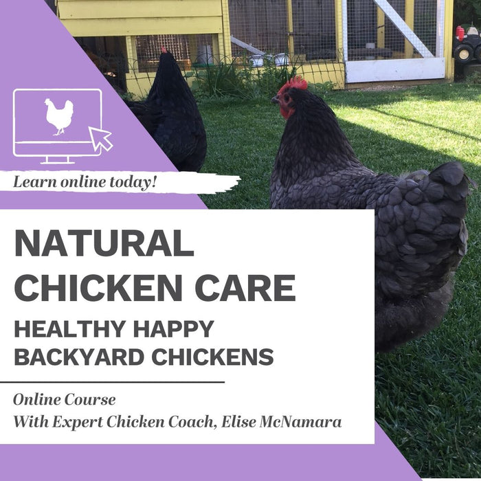 Natural Chicken Care - Healthy Happy Backyard Chickens Online Course