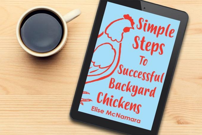 Best Chicken eBook - Simple Steps to Successful Backyard Chickens