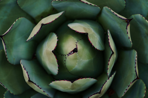 4 Skin Benefits of Aloe Vera