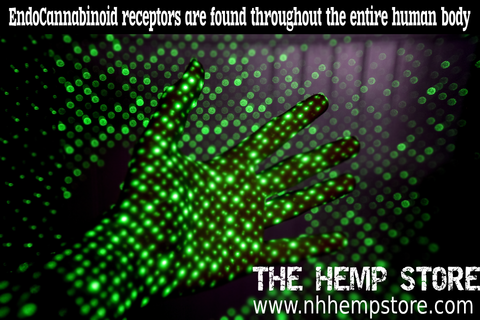 the hemp store cbd oil endocannabi system