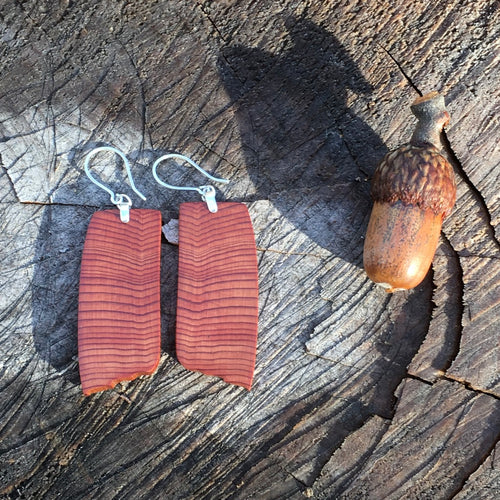 Old Growth Cedar - Growing years - small/medium earrings
