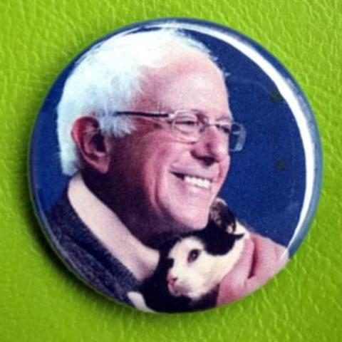 Bernie Sanders with a cat 1.25 inch Pinback Button or Magnet
