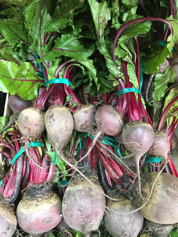 "Beetroot - ""English Now In"" x Bunch,raw"