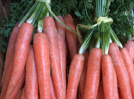Carrots - x 1 Bunch
