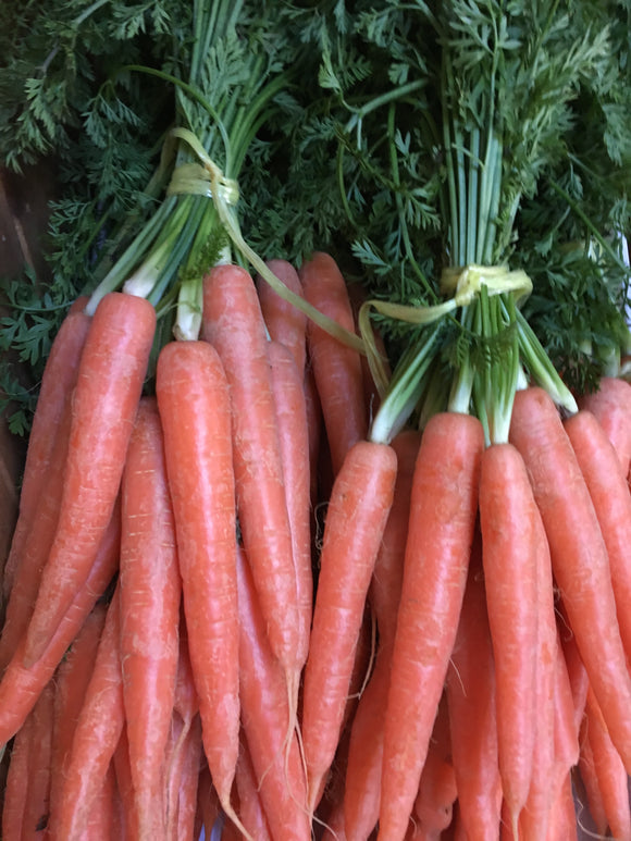 "Carrots - ""Now In, English"" x 1 Bunch"
