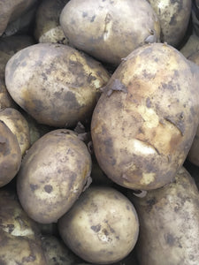 Potato - English, Maris Piper