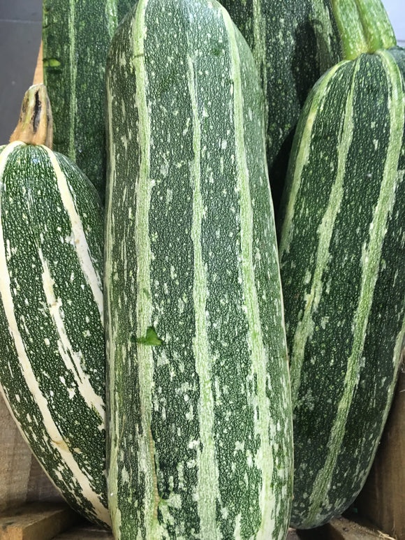 Marrow - Local Grown x 1.