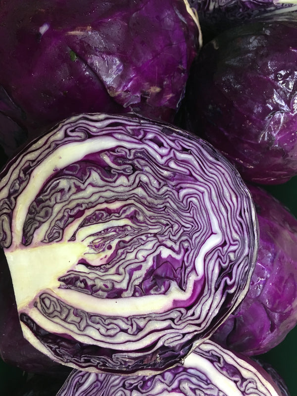 Cabbage Red - x 1/2