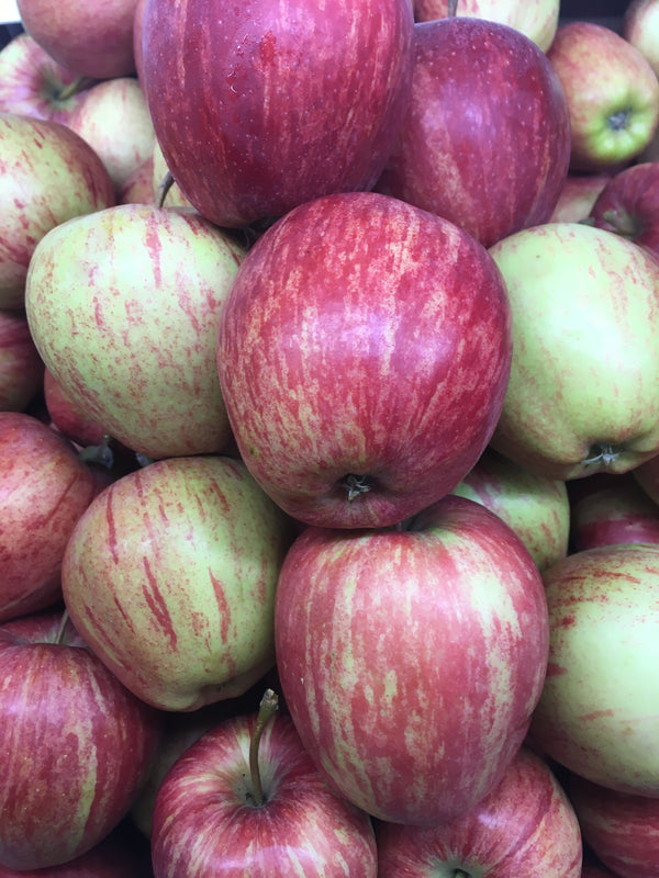 Apple, Royal Gala - Kent x 4