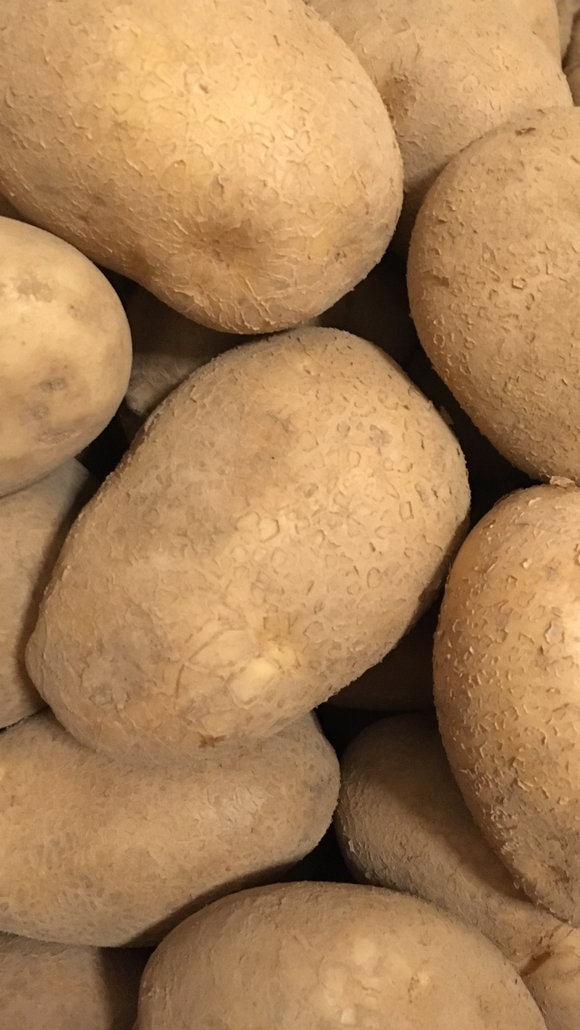 Potato - Wilja, Titchfield x 1kg, 12.5kg, 25kg