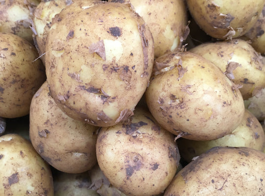 Potatoes - Saxon x 1kg,12.5kg,25kg - TITCHFIELD GROWN