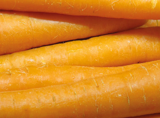 Carrots - x 3 - English, New season